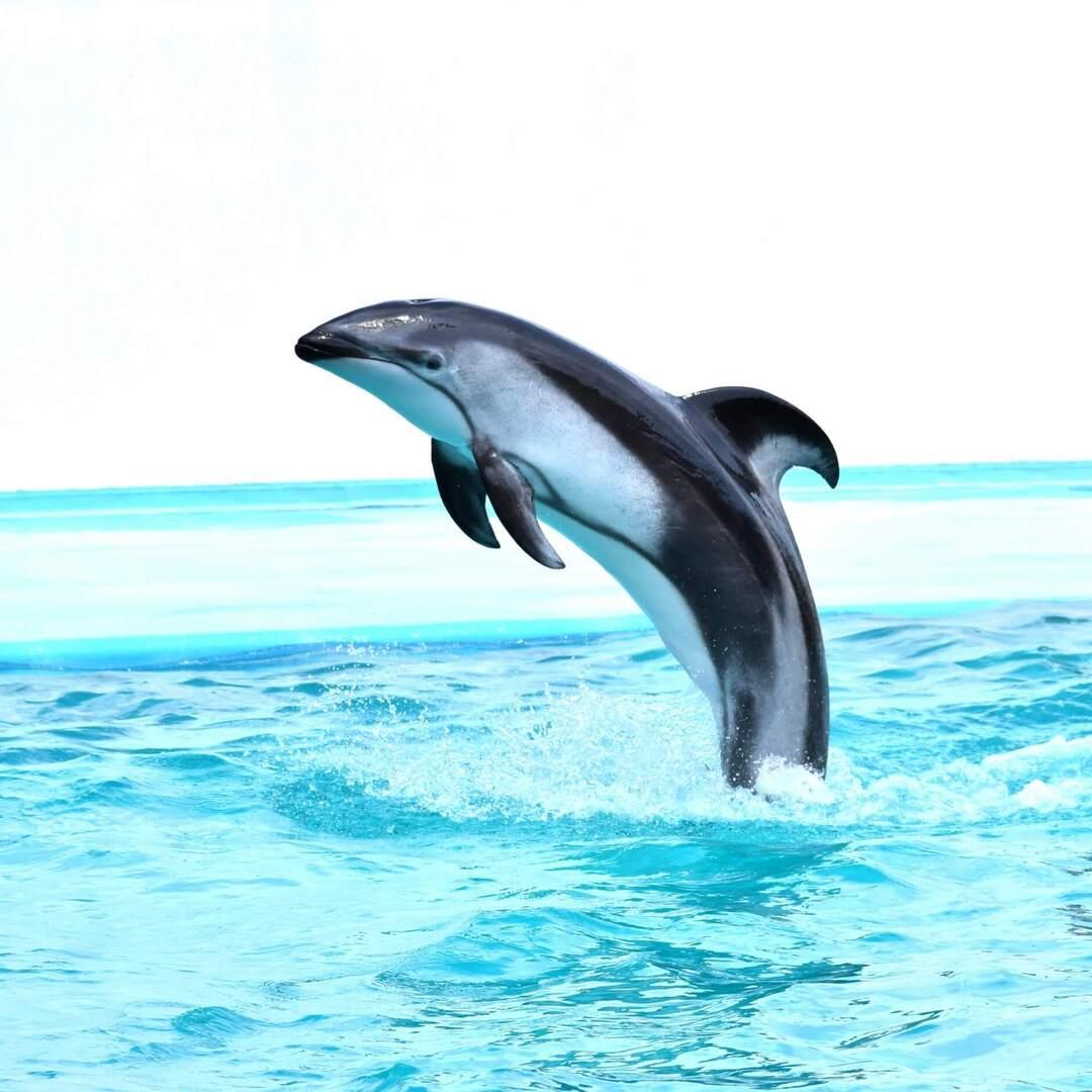 マスクいらず!お出かけできなくてもおうちで楽しめるオンライン動物園&水族館【2021年最新版】