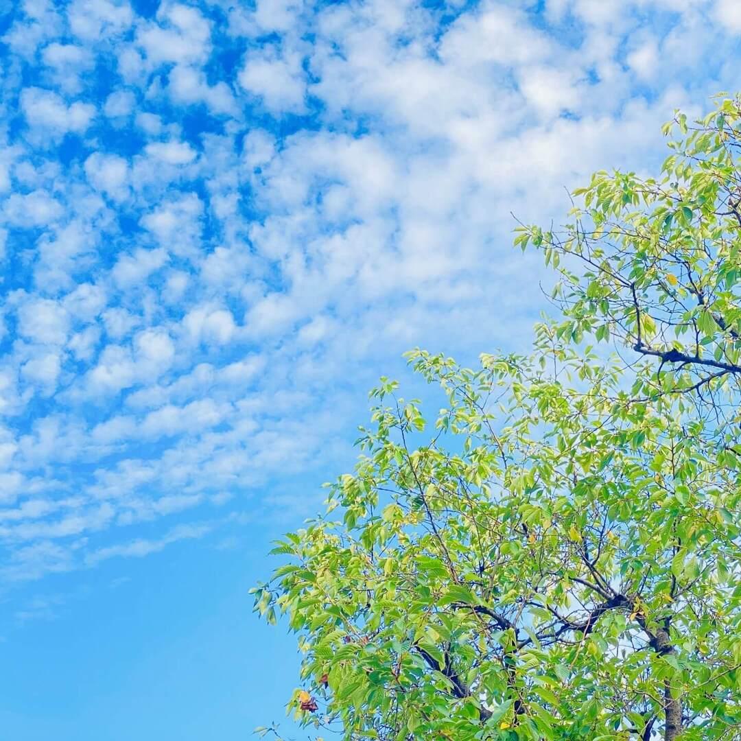 【雲のフシギを解説!】飛行機雲はなぜできる?うろこ雲、わた雲、すじ雲…はどう違う?少しずつ秋の気配の空を親子でチェック