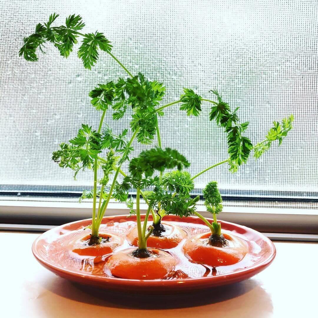 大根、玉ねぎ、人参、パイナップルまで!!残った野菜を再生栽培!おやこで食育「簡単リボベジ」のすすめ