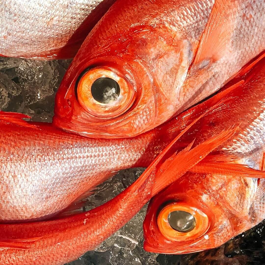 切り身でない魚、子どもに見せていますか?「生き物」が「食べ物」になるまでを学ぶ写真絵本